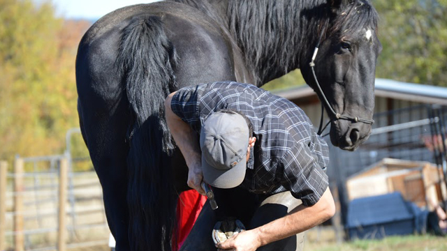 Practical Farrier Program